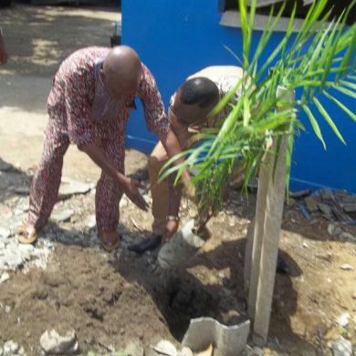 plantation d'arbre par le DG UMAT